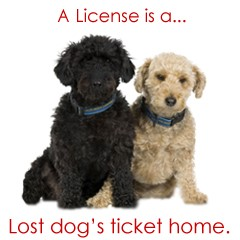dog needs License